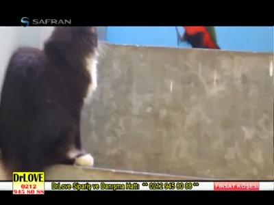 Fréquence Safoa TV tv تردد قناة